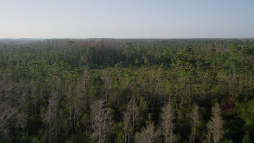 5K stock footage aerial video of flying over deciduous trees in a forest near Orlando, Florida at sunrise Aerial Stock Footage | AX0018_038