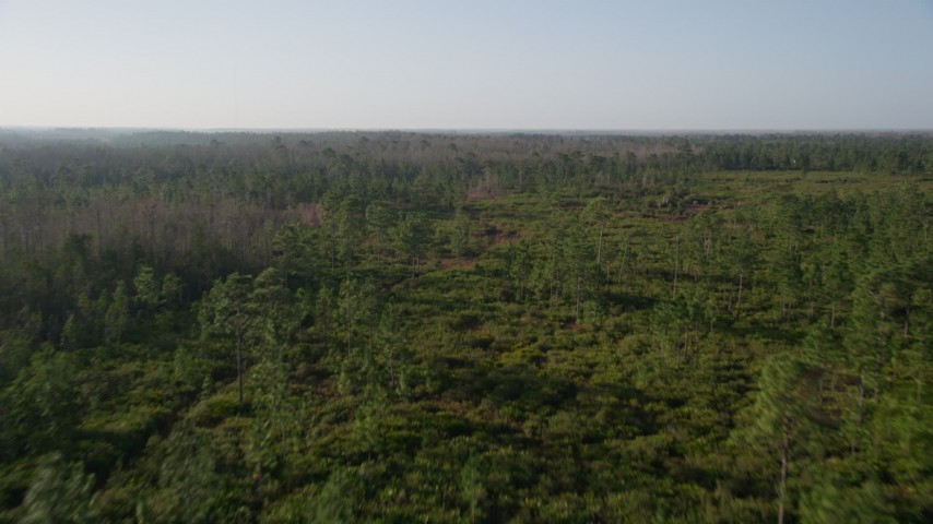 5K stock footage aerial video fly over trees and green clearings in a forest near Orlando at sunrise Aerial Stock Footage | AX0018_039