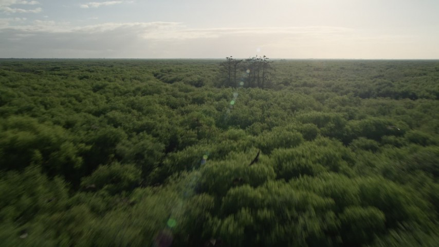 5K stock footage aerial video fly low over forest near Orlando at sunrise, Florida Aerial Stock Footage | AX0018_058