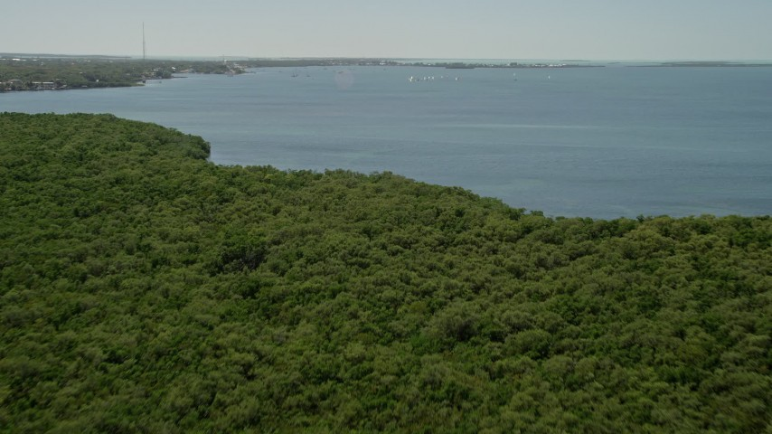 5K stock footage aerial video fly over mangroves, Buttonwood Sound shore, sailboats, Key Largo, Florida Aerial Stock Footage | AX0025_065