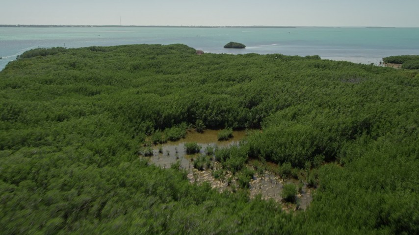 5K stock footage aerial video of flying over mangroves, Tavernier, Florida Aerial Stock Footage   AX0025_098