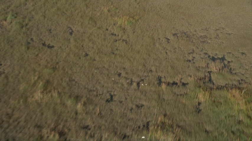 5K stock footage aerial video of flying over birds in flight over Florida Everglades, Florida Aerial Stock Footage   AX0030_002