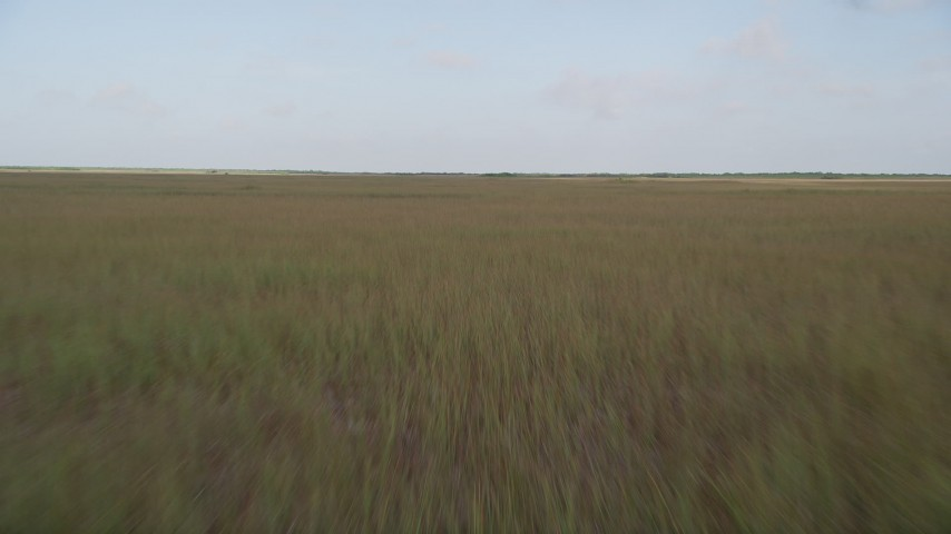 5K stock footage aerial video of flying low over marshland, Florida Everglades, Florida Aerial Stock Footage   AX0030_007