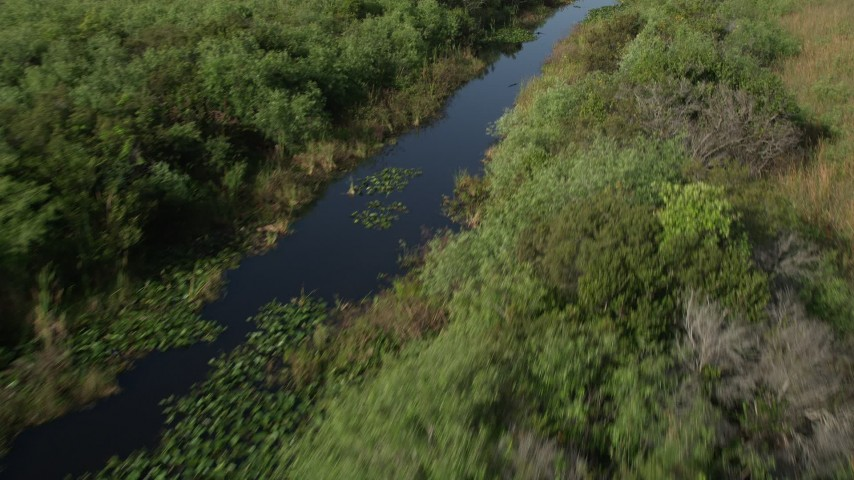 5K stock footage aerial video of following river through everglades, zoom in on alligator, Florida Everglades, Florida Aerial Stock Footage | AX0030_015