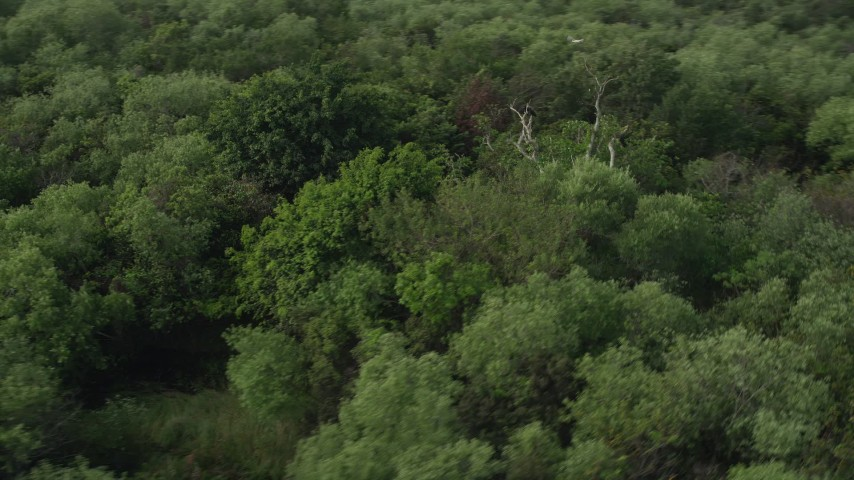 5K stock footage aerial video of trees in the Florida Everglades, Florida Aerial Stock Footage | AX0030_021