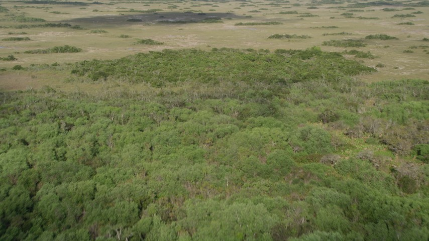 5K stock footage aerial video of flying over trees and marshland, Florida Everglades, Florida Aerial Stock Footage | AX0030_037