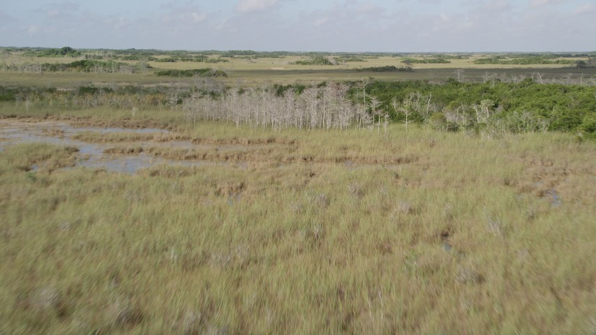 5K stock footage aerial video of descending over trees and marshland, Florida Everglades, Florida Aerial Stock Footage   AX0030_039
