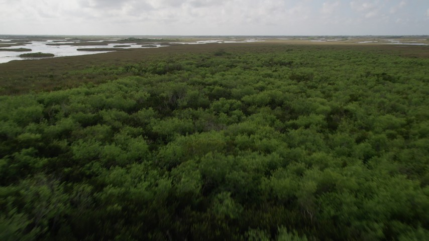 5K aerial stock footage video of flying over trees near marshes in the Florida Everglades, Florida Aerial Stock Footage | AX0030_079