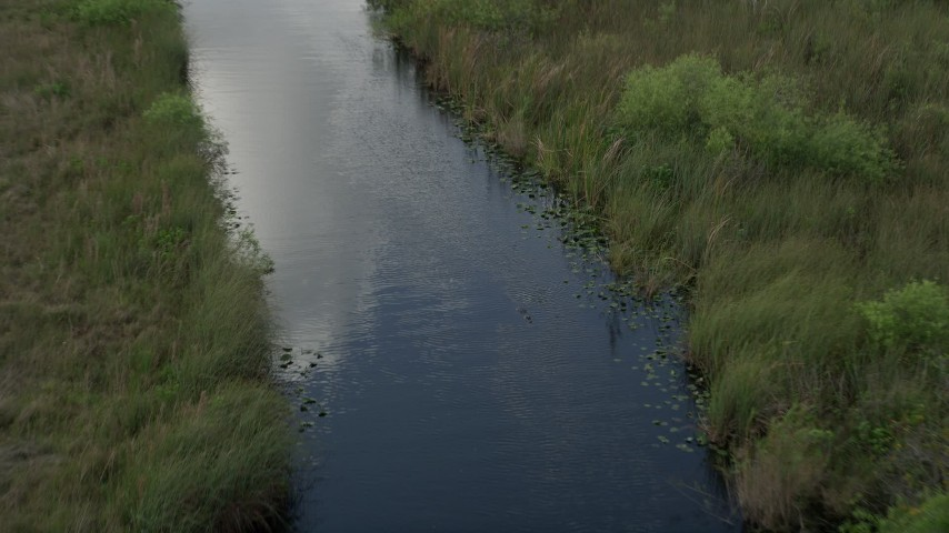 5K stock footage aerial video of following a river, revealing an alligator in the water, Florida Everglades, Florida Aerial Stock Footage | AX0030_100