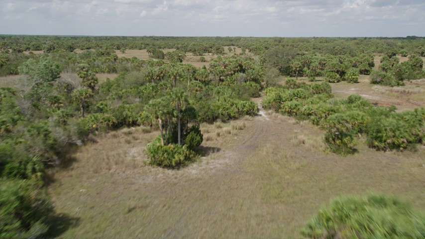 5K stock footage aerial video fly low over palm trees, Cocoa, Florida Aerial Stock Footage AX0034_033 | Axiom Images