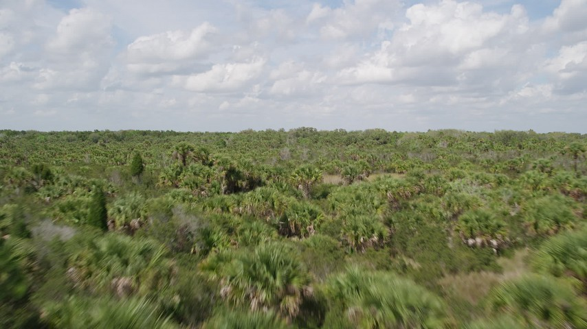 5K stock footage aerial video fly low over palm trees and forest, Cocoa, Florida Aerial Stock Footage | AX0034_034