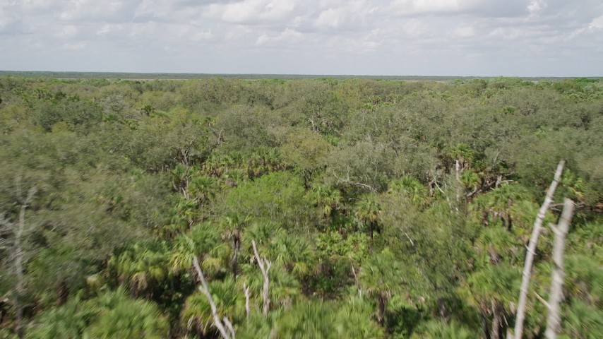 5K stock footage aerial video fly low over palm trees and forest, Cocoa, Florida Aerial Stock Footage | AX0034_035