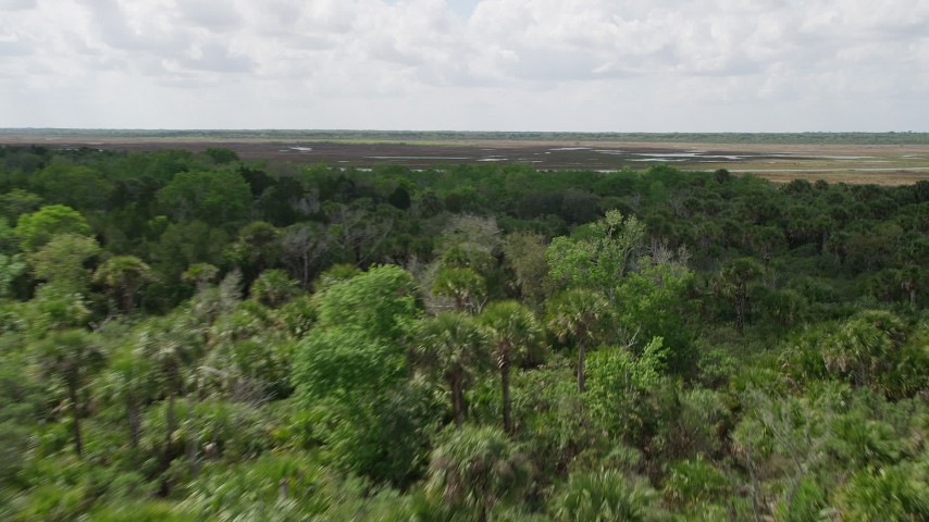 5K stock footage aerial video fly low over forest while approaching a river valley, Cocoa, Florida Aerial Stock Footage | AX0034_037