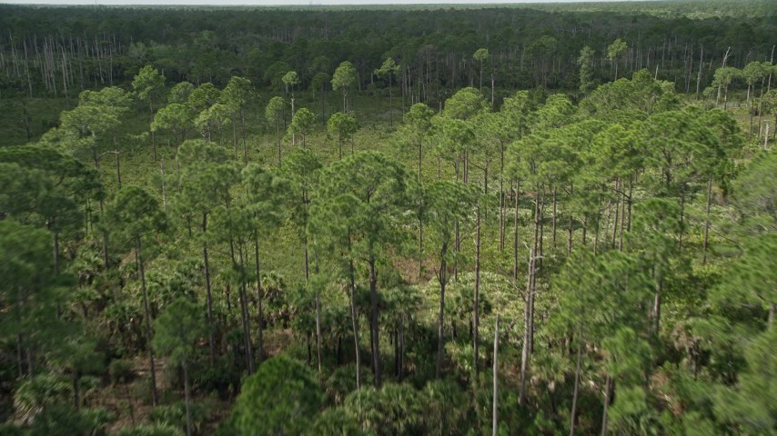 5K stock footage aerial video of flying over a forest and clearing, Cocoa, Florida Aerial Stock Footage | AX0034_051