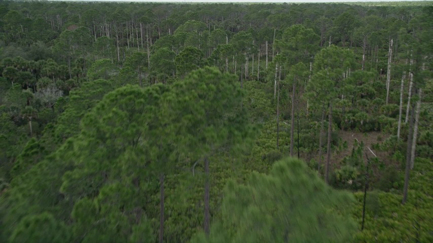 5K stock footage aerial video of flying low over a forest, Cocoa, Florida Aerial Stock Footage | AX0034_052