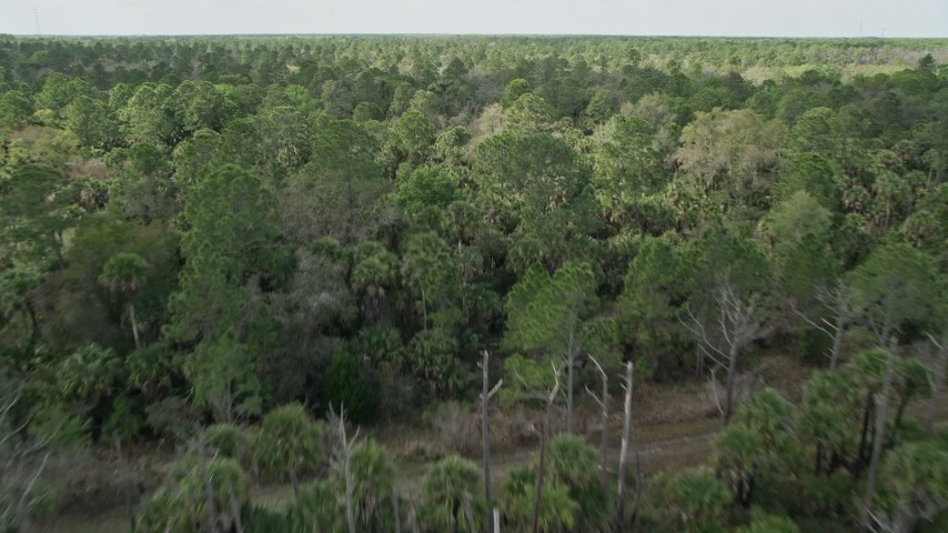 5K stock footage aerial video of flying low over forest, tilt to wider view of forest, Cocoa, Florida Aerial Stock Footage | AX0034_054