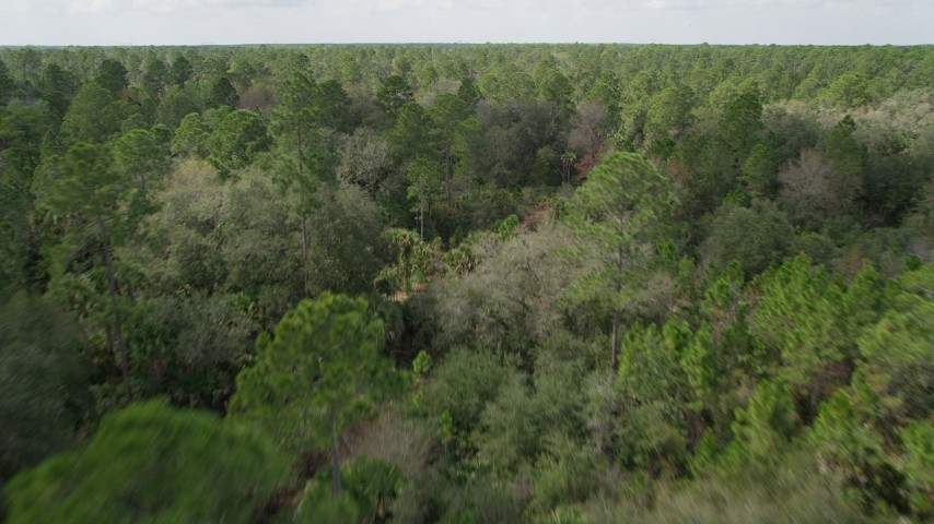 5K stock footage aerial video fly low over forest trees in Cocoa, Florida Aerial Stock Footage | AX0034_055