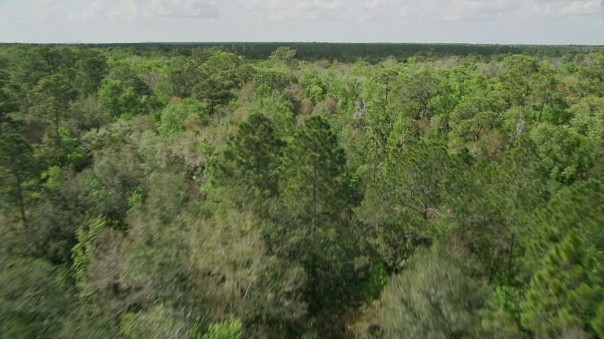 5K stock footage aerial video of flying low over green forest trees, Cocoa, Florida Aerial Stock Footage | AX0034_058