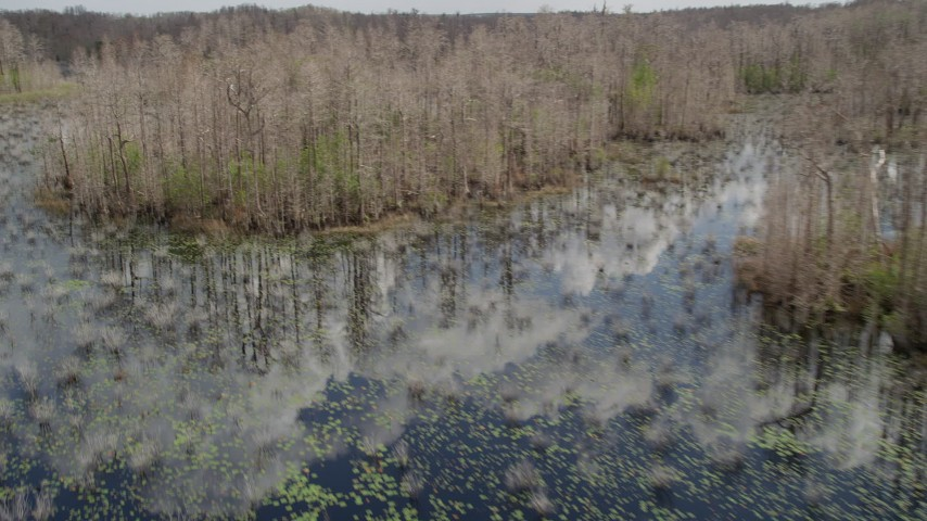 5K stock footage aerial video of flying around trees in a swamp, Orlando, Florida Aerial Stock Footage | AX0035_047