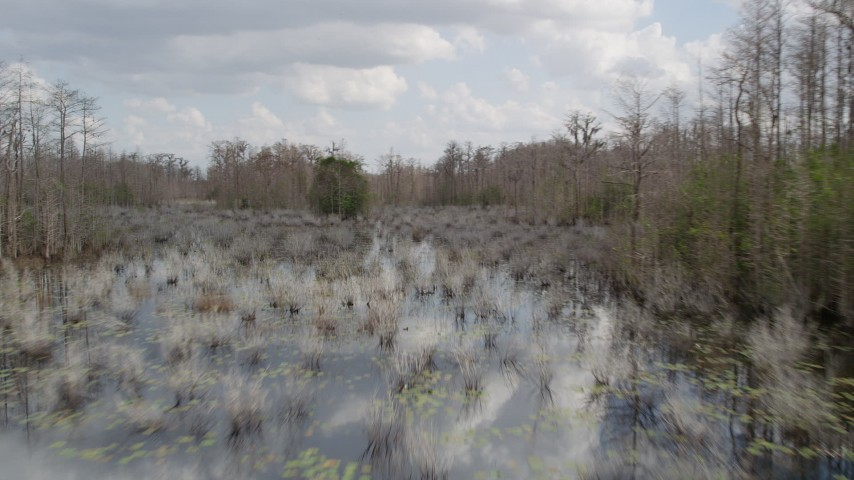 5K stock footage aerial video of flying around trees in a swamp, Orlando, Florida Aerial Stock Footage   AX0035_048