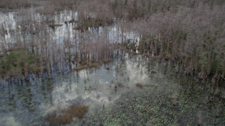 5K stock footage aerial video fly over swamp and leafless trees, Orlando, Florida Aerial Stock Footage   AX0035_051