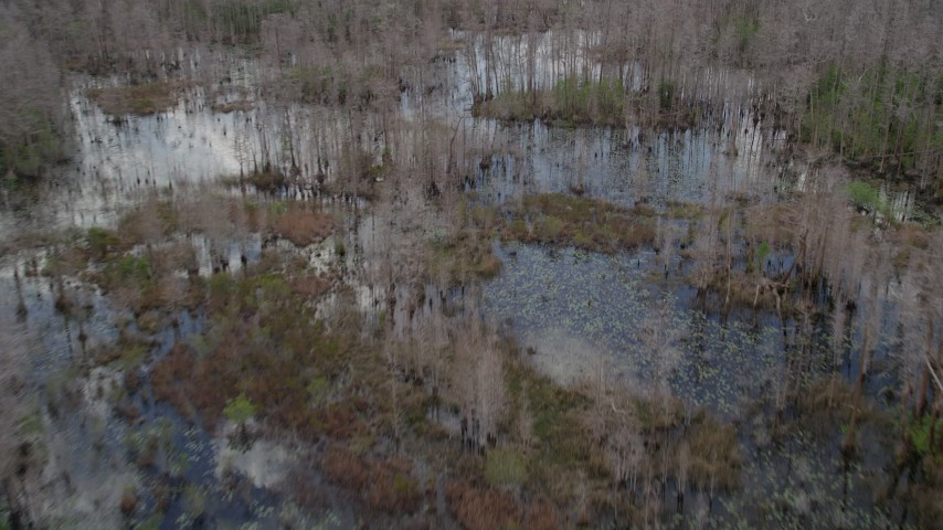 5K stock footage aerial video fly over trees and watery swamp, Orlando, Florida Aerial Stock Footage | AX0035_052