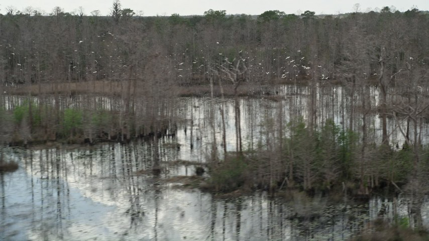 5K stock footage aerial video of birds taking flight over swamps, Orlando, Florida Aerial Stock Footage | AX0035_053