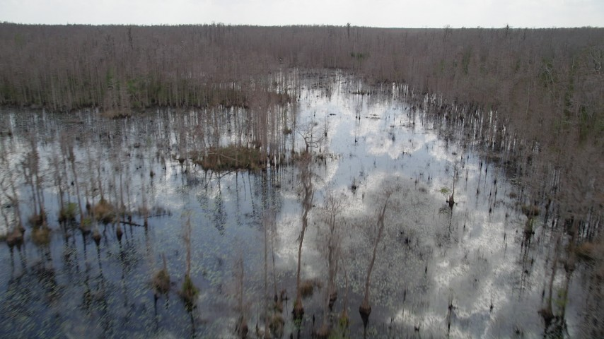 5K stock footage aerial video fly over water and bare trees in a swamp, Orlando, Florida Aerial Stock Footage | AX0035_055