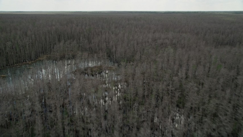 5K stock footage aerial video of flying above swamps and trees, Orlando, Florida Aerial Stock Footage | AX0035_057