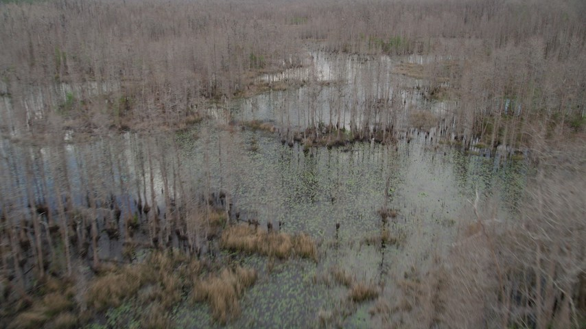 5K stock footage aerial video fly over swampland and trees, Orlando, Florida Aerial Stock Footage   AX0035_058