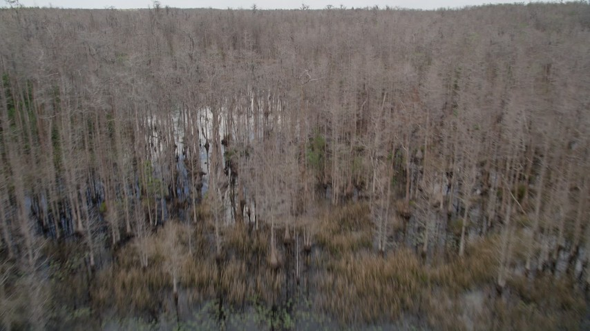 5K stock footage aerial video of flying over swampland and trees, Orlando, Florida Aerial Stock Footage | AX0035_060