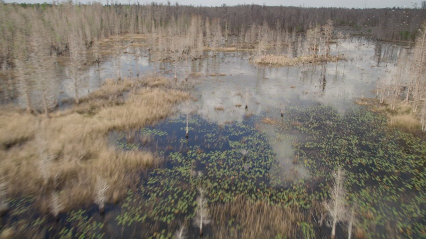 5K stock footage aerial video fly over trees revealing swamp, Orlando, Florida Aerial Stock Footage | AX0035_062