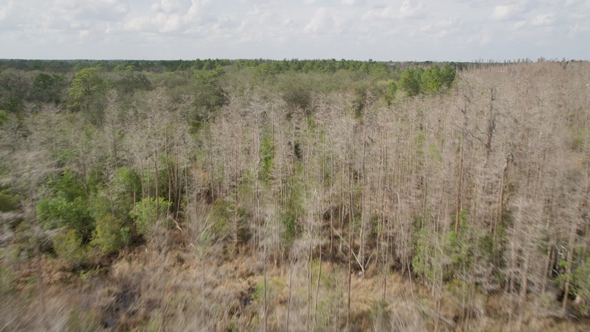 5K stock footage aerial video fly over leafless trees toward green forest, Orlando, Florida Aerial Stock Footage | AX0035_064