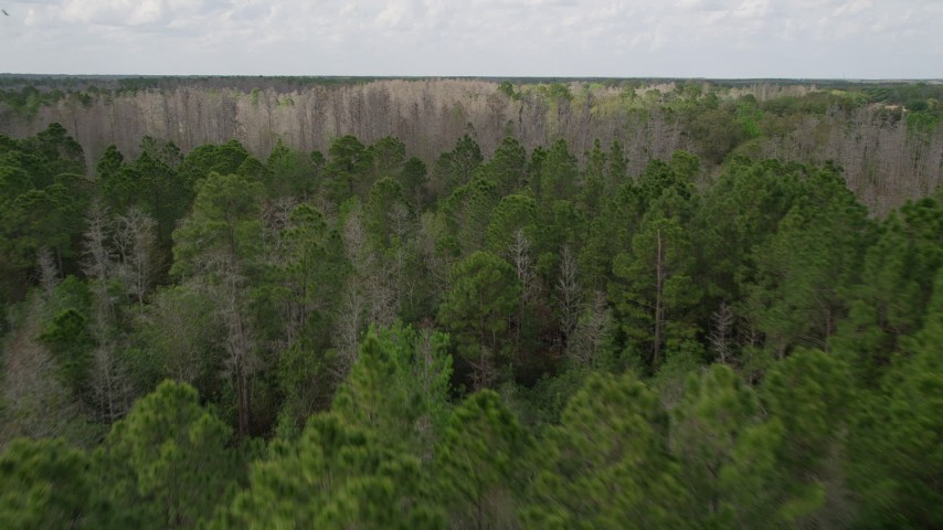 5K stock footage aerial video fly over green forest and orbit a cluster of bare trees, Orlando, Florida Aerial Stock Footage | AX0035_065