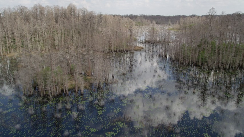 5K stock footage aerial video fly low over a swamp in Orlando, Florida Aerial Stock Footage | AX0035_069
