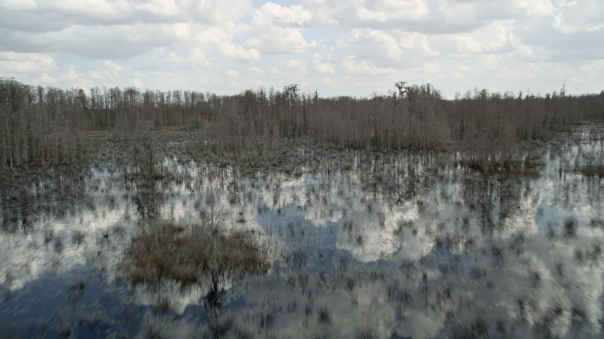 5K stock footage aerial video fly low over a swamp in Orlando, Florida Aerial Stock Footage   AX0035_070E