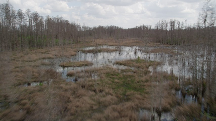 Image result for urban swamp orlando