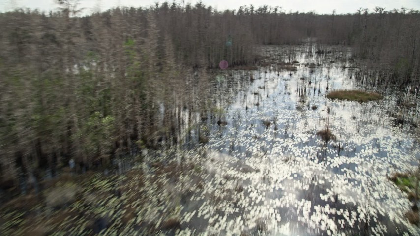 5K stock footage aerial video fly over swamp and bare trees, Orlando, Florida Aerial Stock Footage | AX0035_072E