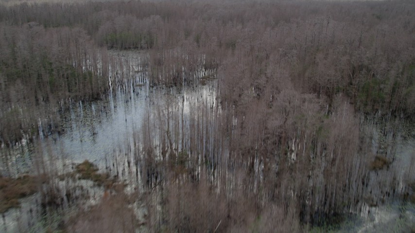 5K stock footage aerial video fly over swamp with thick cluster of bare trees, Orlando, Florida Aerial Stock Footage | AX0035_073