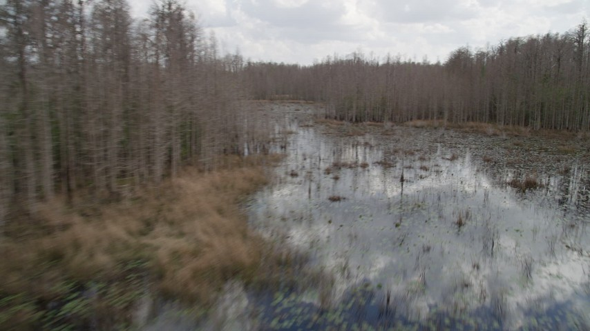 5K stock footage aerial video fly low around leafless trees in a swamp, Orlando, Florida Aerial Stock Footage   AX0035_075