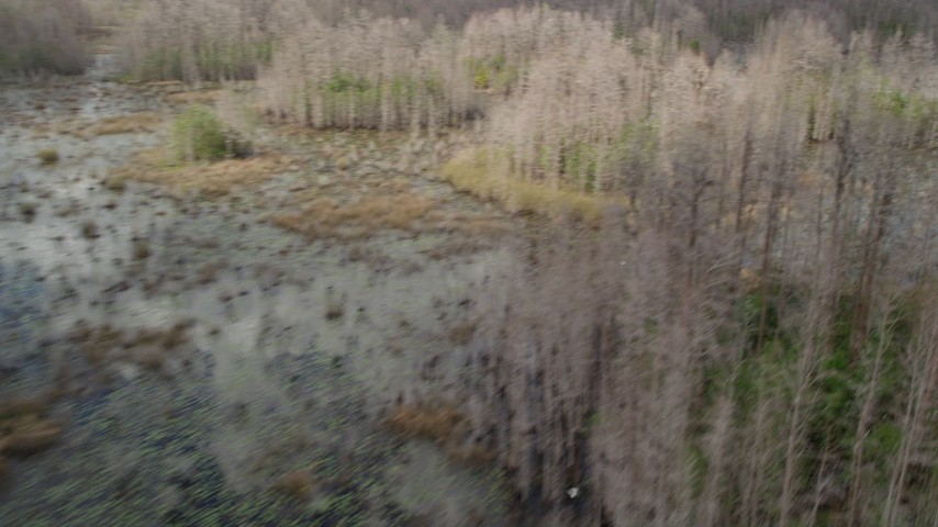 5K stock footage aerial video fly low over bare trees and swampland, Orlando. Florida Aerial Stock Footage | AX0035_076