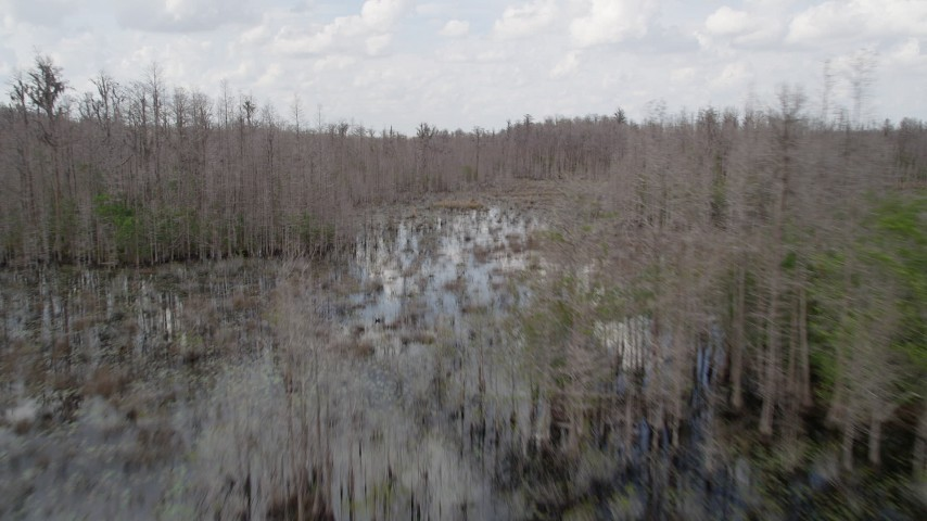 5K stock footage aerial video fly low over swamps and bare trees, Orlando, Florida Aerial Stock Footage | AX0035_078