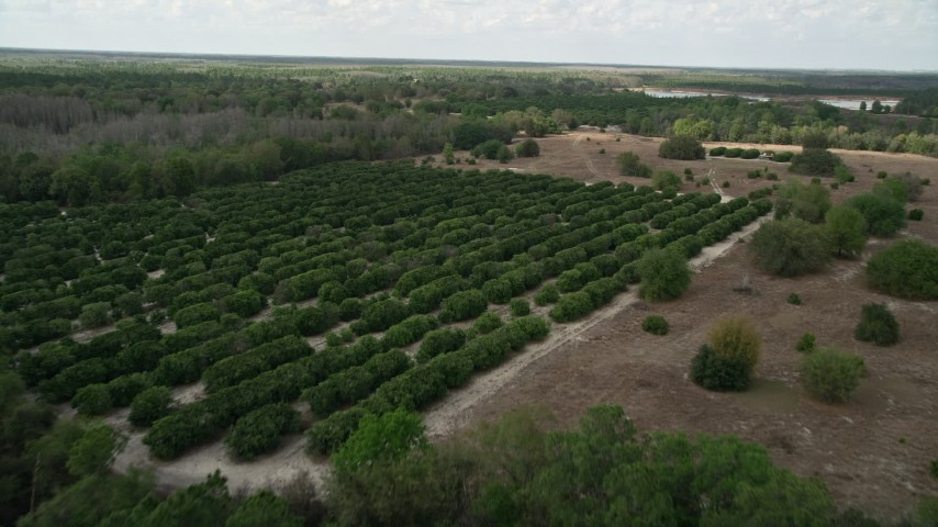 5K stock footage aerial video of approaching and flying by an orchard, Orlando, Florida Aerial Stock Footage | AX0035_082
