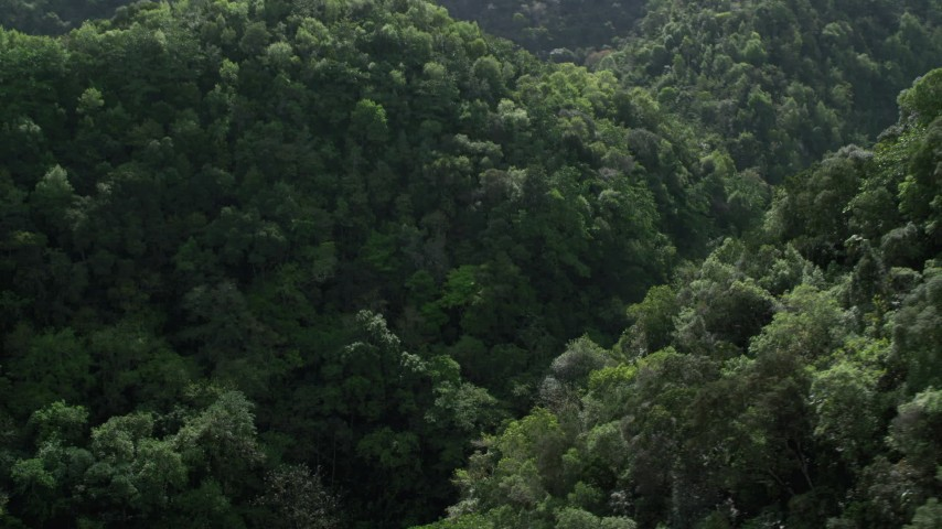 5k Aerial Video Flying through the lush jungle and mountains, Karst Forest, Puerto Rico  Aerial Stock Footage | AX101_055