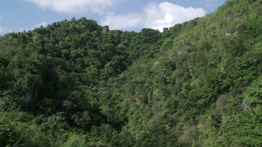 5k Aerial Video Flying through lush dense trees, Karst Forest, Puerto Rico Aerial Stock Footage | AX101_058