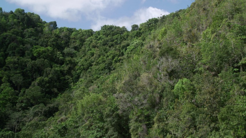 5k Aerial Video of Lush dense trees, Karst Forest, Puerto Rico Aerial Stock Footage | AX101_059