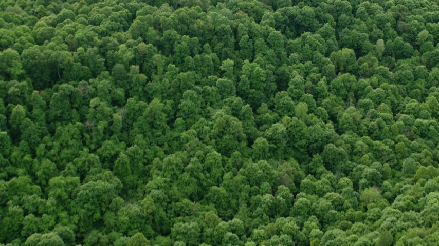 5K stock footage aerial video flying away from forests revealing rural homes, Darlington, Pennsylvania Aerial Stock Footage | AX107_120