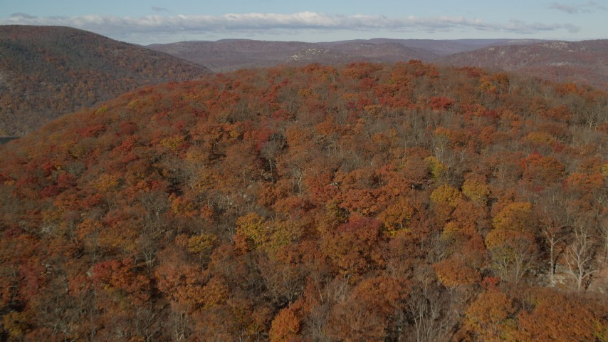 6K stock footage aerial video fly over dense forest in Autumn, Westchester County, New York Aerial Stock Footage AX119_152 | Axiom Images