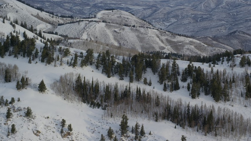Approach Trees on a Snowy Mountain Ridge at Sunrise in Utah Aerial Stock Footage | AX124_136