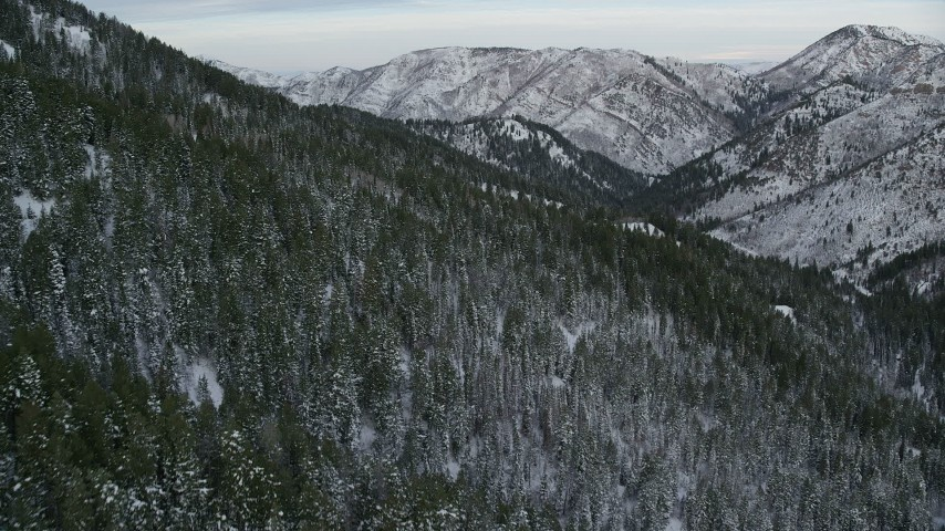 Flying Low over Snowy Forest in the Wasatch Range at Utah Aerial Stock Footage   AX124_156